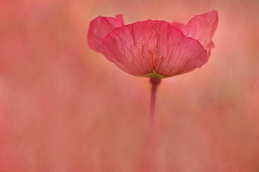 Poppy Grace by Kathleen Clemons