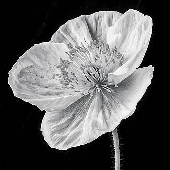 Poppy In Black And White by Garry Gay