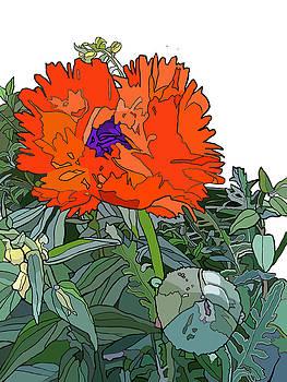 Poppy by Jamie Downs