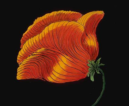 Mary Erbert - Poppy