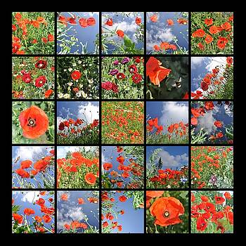 Poppy Mosaic by Hans Kool