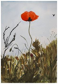 Poppy on the field by Manuela Constantin