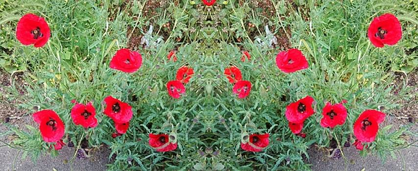Poppy Photo 1172 Mirror by Julia Woodman