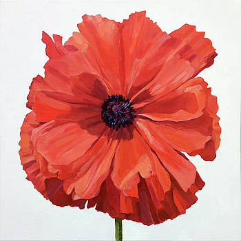 Poppy Portrait by Kathy Armstrong