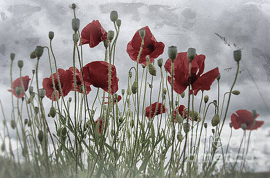 Poppy wash by Steev Stamford