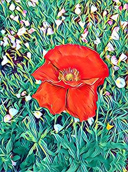 Poppy with Yellow Center by Patricia Rex