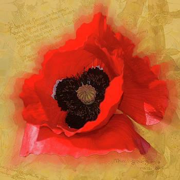 Poppy Words by Neil Finnemore