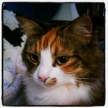 Poppy...full Of Snuggle And Purr by Tammy Winand