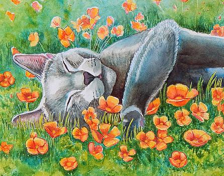 Poppy's Poppies by Rachel Armington