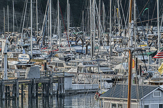 Port of Friday Harbor Marina by Betsy Knapp