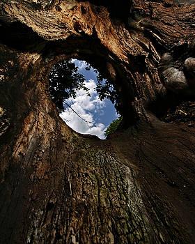 Portal by Neil Shapiro