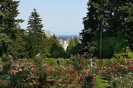 Portland Skyline from the International Rose Test Garden by Donna Haggerty