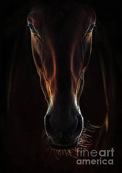Portrait Of A Brown Horse Close Up by Dimitar Hristov
