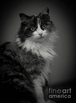 Portrait of a Cat by Mats Silvan