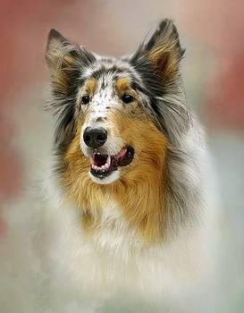 Portrait of a Collie by Stephanie Calhoun