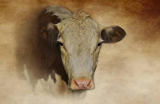 Portrait Of A Cow by Stephanie Calhoun
