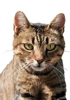 Tracey Harrington-Simpson - Portrait Of A Cute Tabby Cat With Direct Eye Contact Isolated