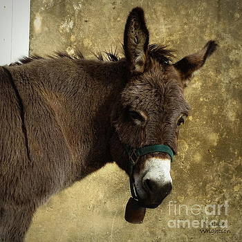 Portrait Of A Donkey by Lainie Wrightson