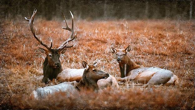 Portrait of a Elk Family by Garett Gabriel