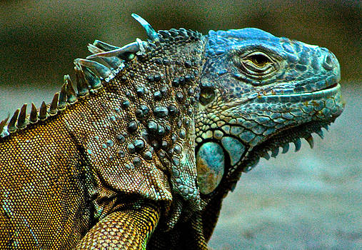 Venetia Featherstone-Witty - Portrait of a Green Iguana