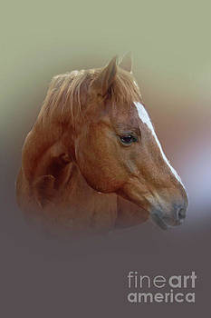 Portrait of a Horse by Judy Hall-Folde