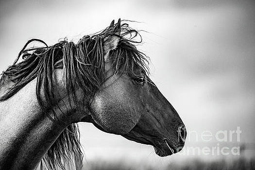 Portrait of a Horse by Katya Horner