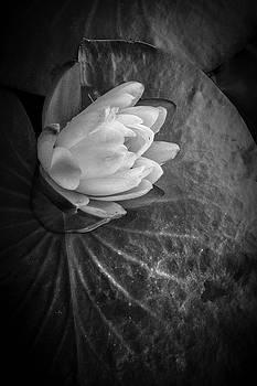 Debra and Dave Vanderlaan - Portrait of a Lily
