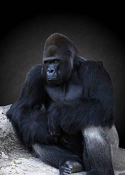 Portrait of a Male Gorilla by Debi Dalio
