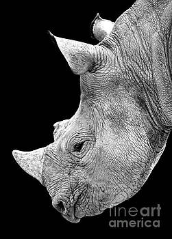 Portrait of a Rhinoceros II black and white version  by Jim Fitzpatrick