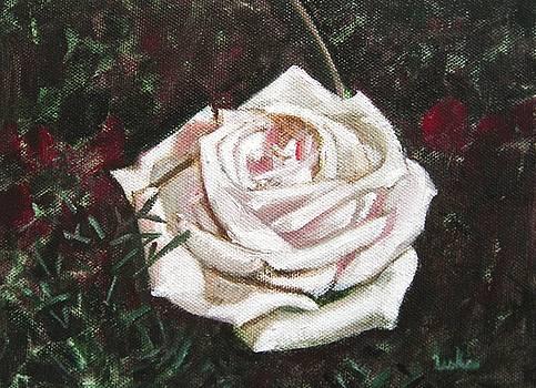 Usha Shantharam - Portrait of a Rose 3