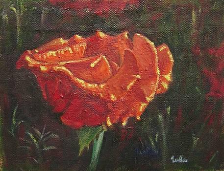 Usha Shantharam - Portrait of a Rose 8