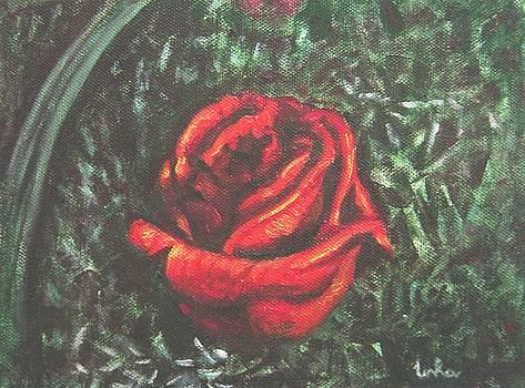 Usha Shantharam - Portrait of a Rose