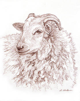 Phyllis Tarlow - Portrait of a Sheep