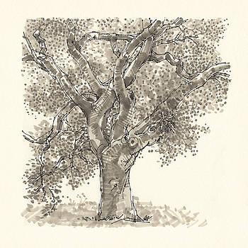 Judith Kunzle - Portrait of a tree