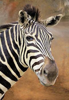 Portrait of a Zebra by Rosalie Scanlon