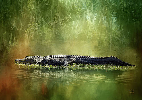 Portrait of Alligator by Jim Ziemer