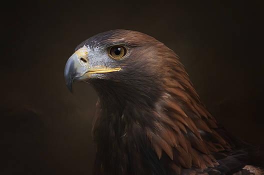 Portrait of an Eagle by Sue Fulton