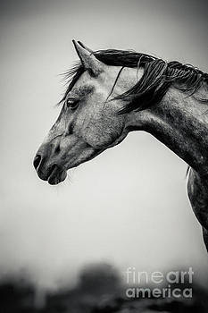 Dimitar Hristov - Portrait of Beautiful Horse in Black and White