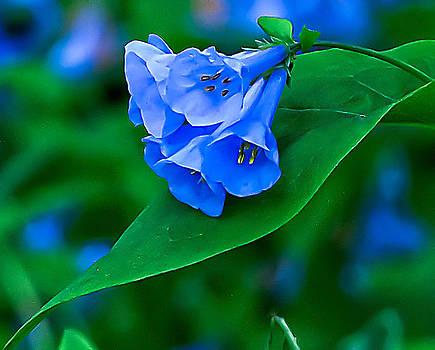 Portrait of Bluebells by George Lovelace