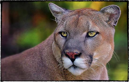 Portrait of  Cougar  by Garett Gabriel