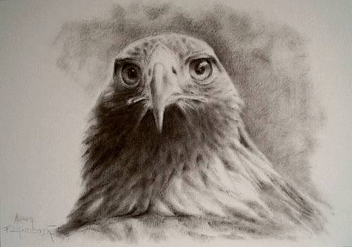 Portrait of eagle by Anna Franceova