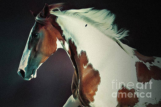 Dimitar Hristov - Portrait Of Galloping Paint Horse