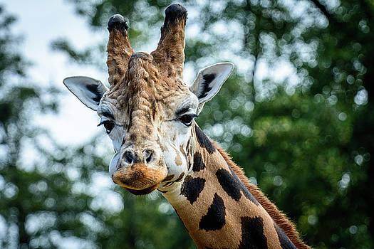 Portrait of Giraffe by Libor Vrska
