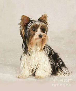 Portrait Yorkie Miss Mia Photo painting by Heinz G Mielke