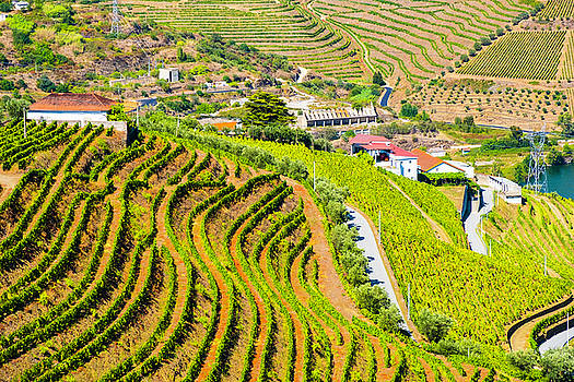 Duoro Valley Vineyard Overview 2 - Portugal by Madeline Ellis
