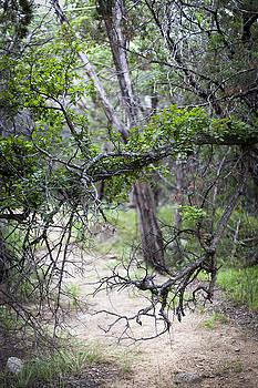 Possum Kingdom Trees by Jennifer Zandstra
