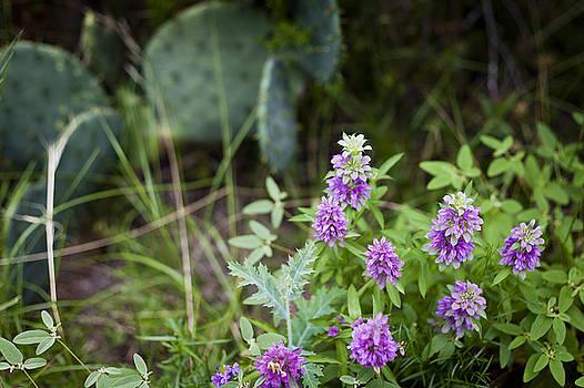 Possum Kingdom Wildflowers 2 by Jennifer Zandstra