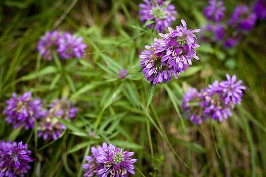 Possum Kingdom Wildflowers by Jennifer Zandstra