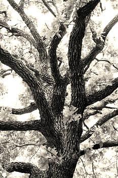 Jeannie Burleson - Post Oak