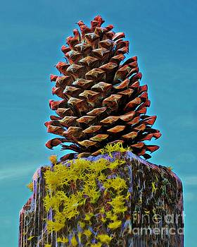 Posted Pinecone by Patrick Witz